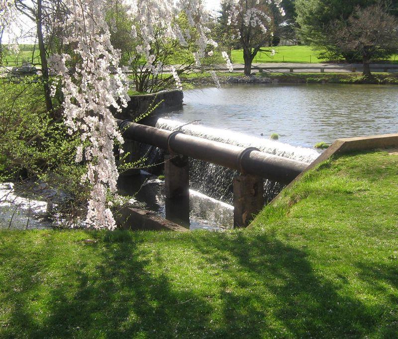 Duck pond spring